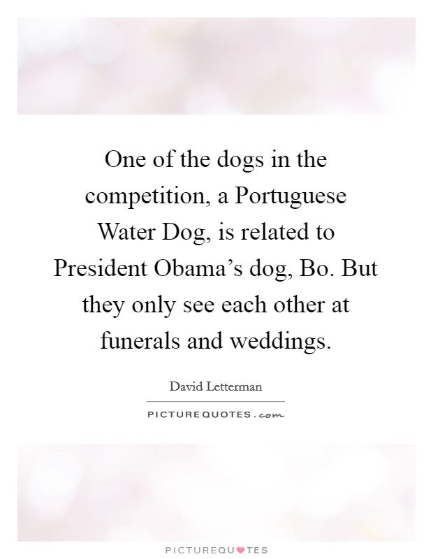 One of the dogs in the competition, a Portuguese Water Dog, is related to President Obama's dog, Bo. But they only see each other at funerals and weddings Picture Quote #1