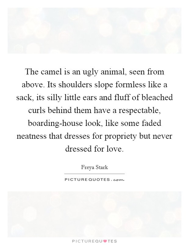 The camel is an ugly animal, seen from above. Its shoulders slope formless like a sack, its silly little ears and fluff of bleached curls behind them have a respectable, boarding-house look, like some faded neatness that dresses for propriety but never dressed for love Picture Quote #1
