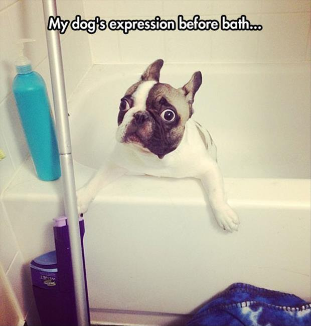 My dog's expression before bath Picture Quote #1