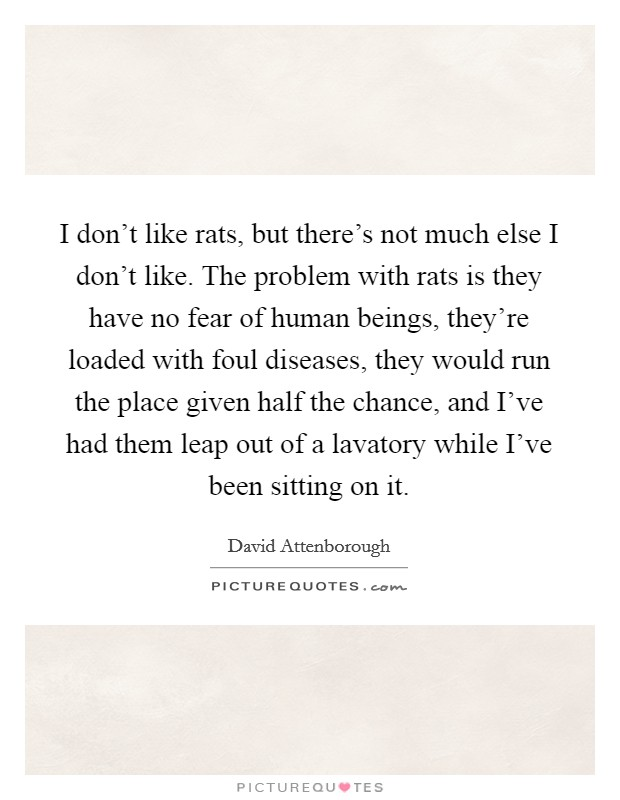 I don't like rats, but there's not much else I don't like. The problem with rats is they have no fear of human beings, they're loaded with foul diseases, they would run the place given half the chance, and I've had them leap out of a lavatory while I've been sitting on it Picture Quote #1