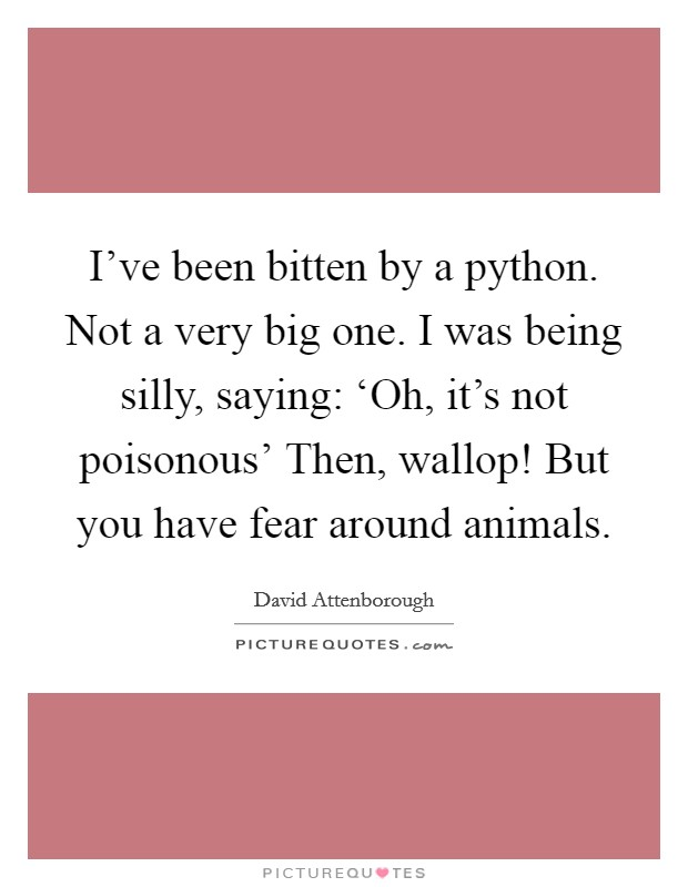 I've been bitten by a python. Not a very big one. I was being silly, saying: 'Oh, it's not poisonous' Then, wallop! But you have fear around animals Picture Quote #1