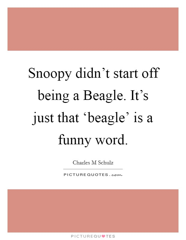 Snoopy didn't start off being a Beagle. It's just that 'beagle' is a funny word Picture Quote #1