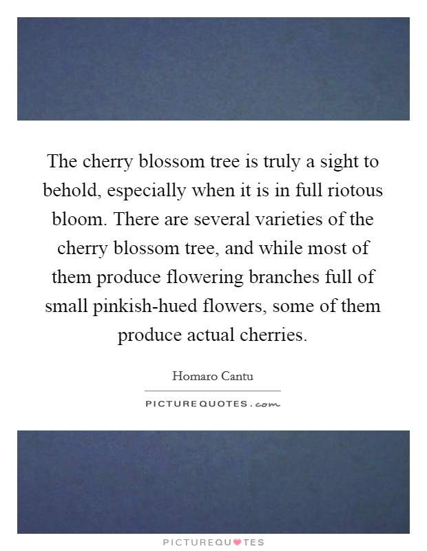 The cherry blossom tree is truly a sight to behold, especially when it is in full riotous bloom. There are several varieties of the cherry blossom tree, and while most of them produce flowering branches full of small pinkish-hued flowers, some of them produce actual cherries Picture Quote #1
