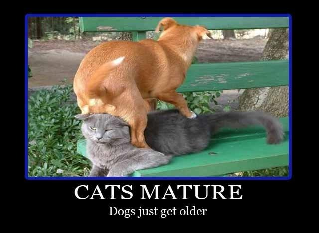 Cats mature. Dogs just get older Picture Quote #1