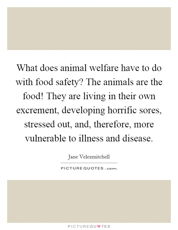 What does animal welfare have to do with food safety? The animals are the food! They are living in their own excrement, developing horrific sores, stressed out, and, therefore, more vulnerable to illness and disease Picture Quote #1