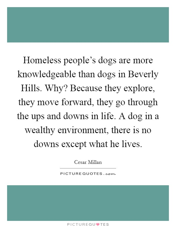 Homeless people's dogs are more knowledgeable than dogs in Beverly Hills. Why? Because they explore, they move forward, they go through the ups and downs in life. A dog in a wealthy environment, there is no downs except what he lives Picture Quote #1
