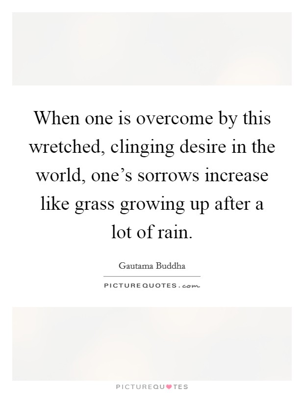 When one is overcome by this wretched, clinging desire in the world, one's sorrows increase like grass growing up after a lot of rain Picture Quote #1