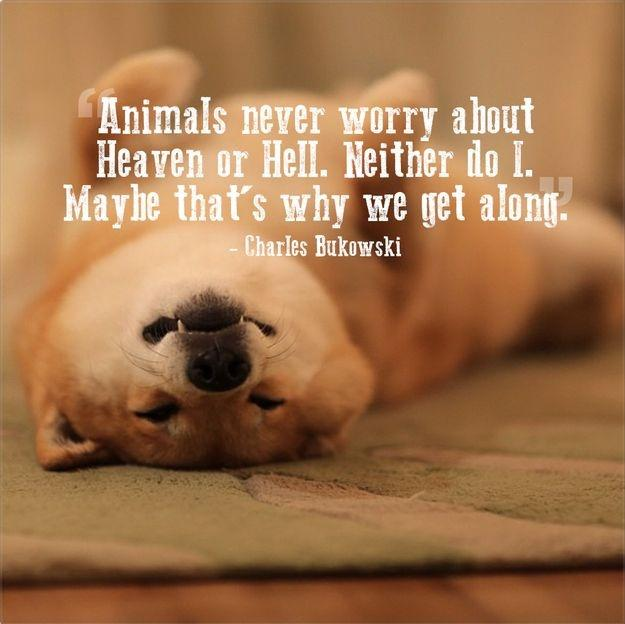 Animals never worry about Heaven or Hell. Neither do I. Maybe that's why we get along Picture Quote #1