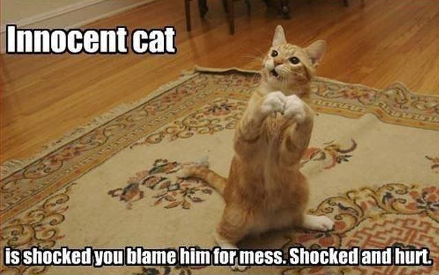 Innocent cat is shocked you blame him for the mess. Shocked and hurt Picture Quote #1