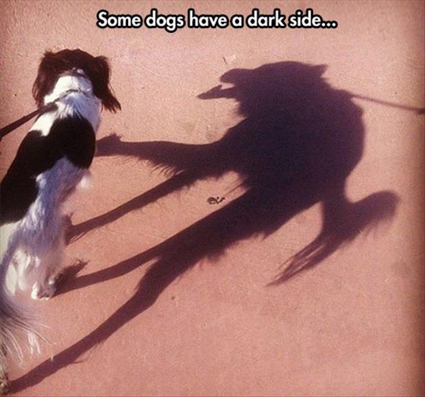 Some dogs have a dark side Picture Quote #1