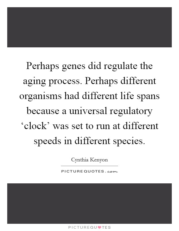 Perhaps genes did regulate the aging process. Perhaps different organisms had different life spans because a universal regulatory 'clock' was set to run at different speeds in different species Picture Quote #1