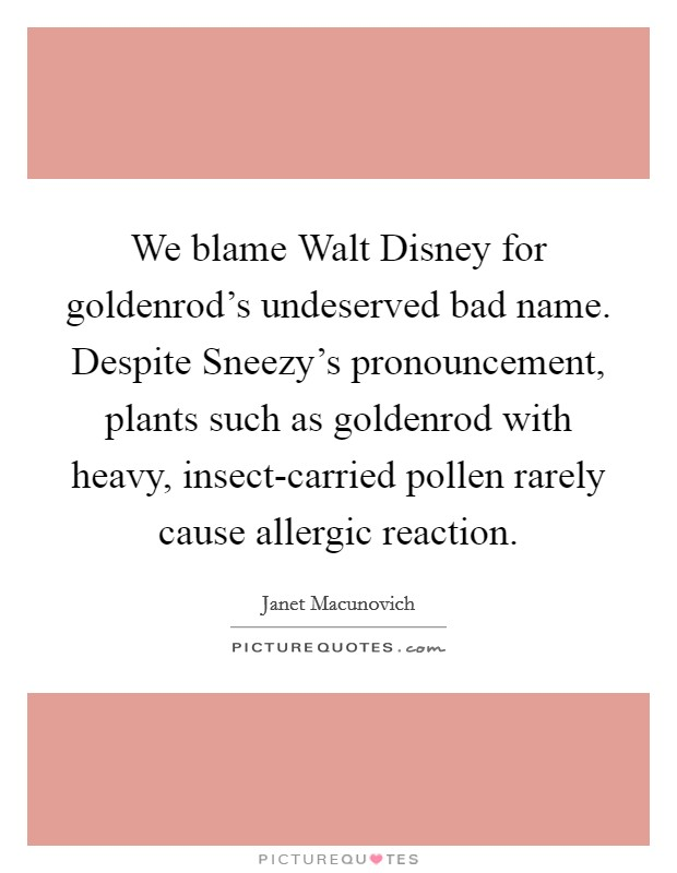 We blame Walt Disney for goldenrod's undeserved bad name. Despite Sneezy's pronouncement, plants such as goldenrod with heavy, insect-carried pollen rarely cause allergic reaction Picture Quote #1