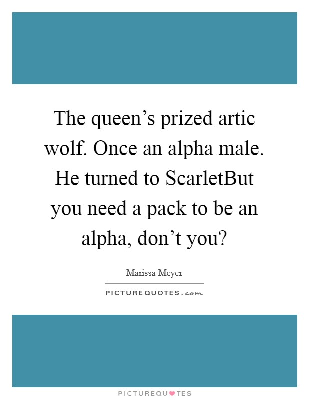 The queen's prized artic wolf. Once an alpha male. He turned to ScarletBut you need a pack to be an alpha, don't you? Picture Quote #1