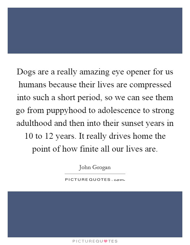 Dogs are a really amazing eye opener for us humans because their lives are compressed into such a short period, so we can see them go from puppyhood to adolescence to strong adulthood and then into their sunset years in 10 to 12 years. It really drives home the point of how finite all our lives are Picture Quote #1