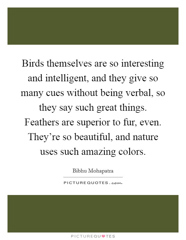 Birds themselves are so interesting and intelligent, and they give so many cues without being verbal, so they say such great things. Feathers are superior to fur, even. They're so beautiful, and nature uses such amazing colors Picture Quote #1
