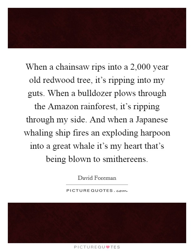 When a chainsaw rips into a 2,000 year old redwood tree, it's ripping into my guts. When a bulldozer plows through the Amazon rainforest, it's ripping through my side. And when a Japanese whaling ship fires an exploding harpoon into a great whale it's my heart that's being blown to smithereens Picture Quote #1