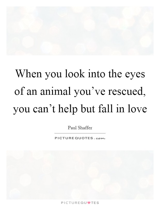 When you look into the eyes of an animal you've rescued, you can't help but fall in love Picture Quote #1