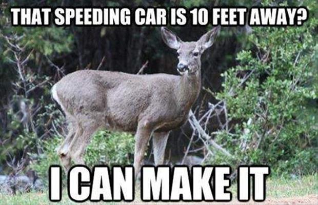 That speeding car is 10 feet away. I can make it Picture Quote #1