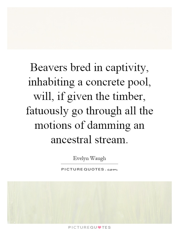 Beavers bred in captivity, inhabiting a concrete pool, will, if given the timber, fatuously go through all the motions of damming an ancestral stream Picture Quote #1