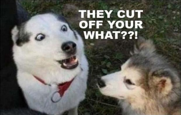 They cut off your what??! Picture Quote #1