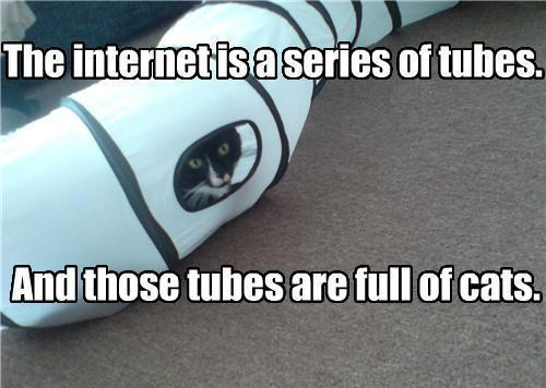 The internet is a series of tubes. And those tubes are full of cats Picture Quote #1
