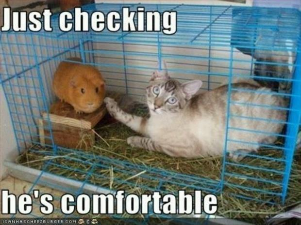 Just Checking He S Comfortable Picture Quotes