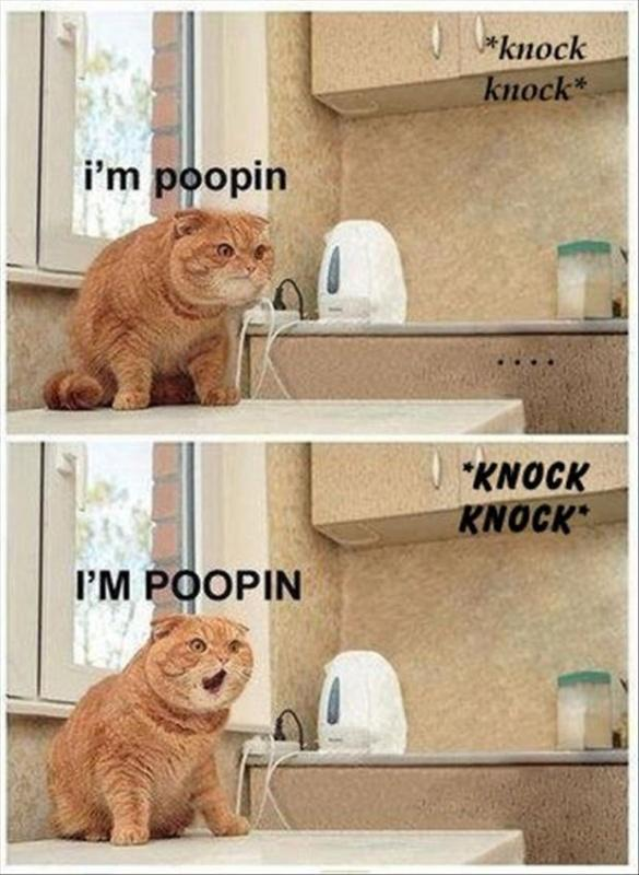 Knock. Knock. I'm poopin. Knock. Knock. I'm pooping! Picture Quote #1