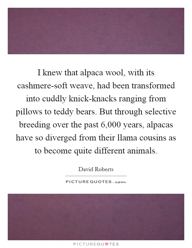 I knew that alpaca wool, with its cashmere-soft weave, had been transformed into cuddly knick-knacks ranging from pillows to teddy bears. But through selective breeding over the past 6,000 years, alpacas have so diverged from their llama cousins as to become quite different animals Picture Quote #1