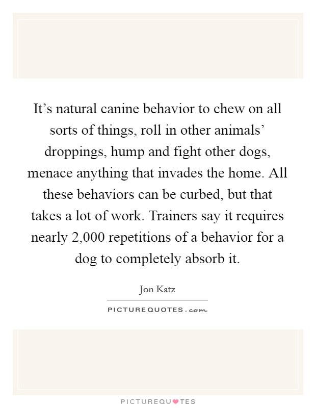 It's natural canine behavior to chew on all sorts of things, roll in other animals' droppings, hump and fight other dogs, menace anything that invades the home. All these behaviors can be curbed, but that takes a lot of work. Trainers say it requires nearly 2,000 repetitions of a behavior for a dog to completely absorb it Picture Quote #1