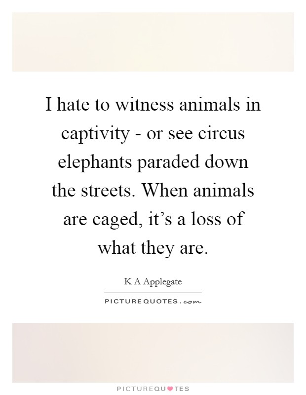 I hate to witness animals in captivity - or see circus elephants paraded down the streets. When animals are caged, it's a loss of what they are Picture Quote #1