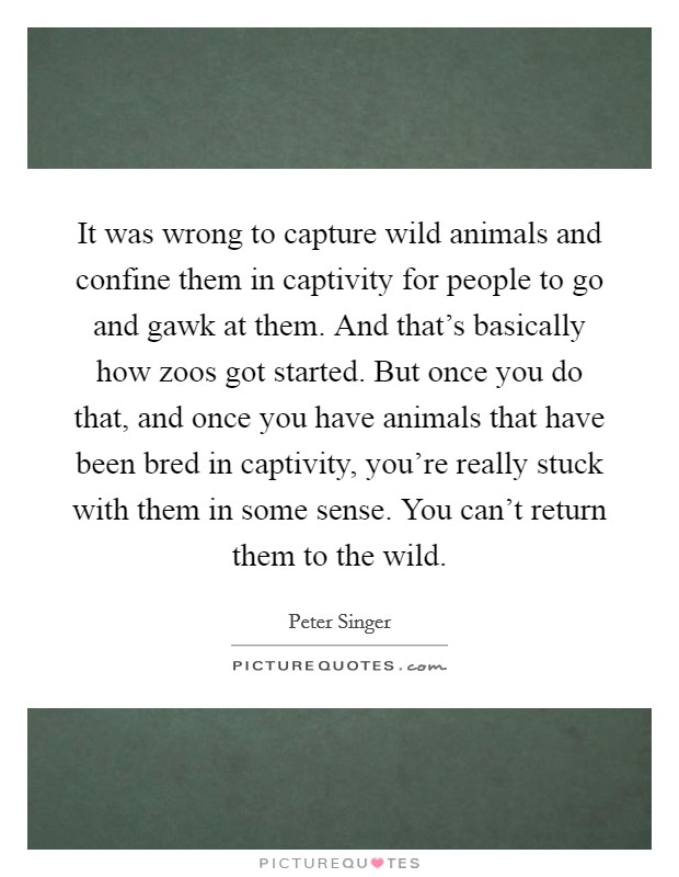 It was wrong to capture wild animals and confine them in captivity for people to go and gawk at them. And that's basically how zoos got started. But once you do that, and once you have animals that have been bred in captivity, you're really stuck with them in some sense. You can't return them to the wild Picture Quote #1