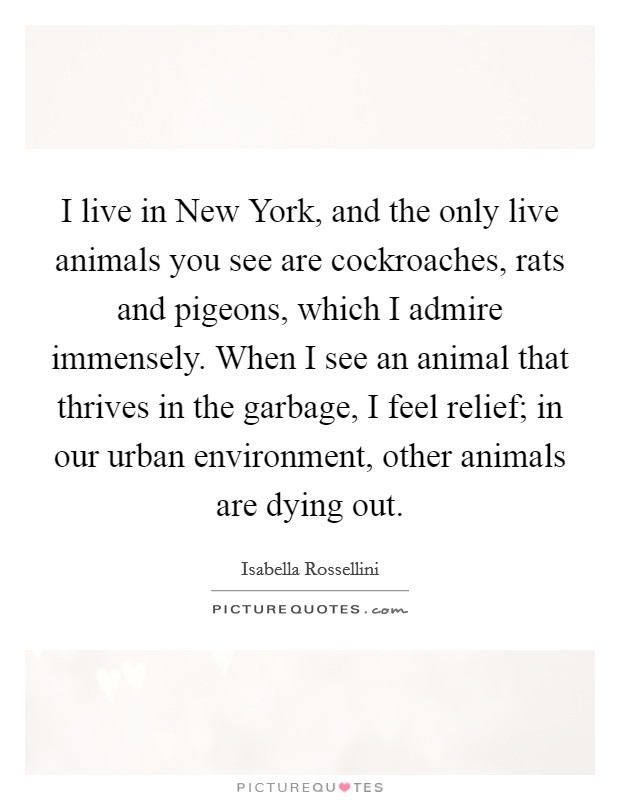 I live in New York, and the only live animals you see are cockroaches, rats and pigeons, which I admire immensely. When I see an animal that thrives in the garbage, I feel relief; in our urban environment, other animals are dying out Picture Quote #1