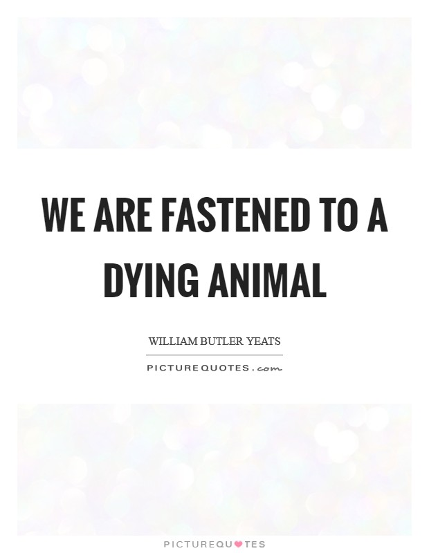 We are fastened to a dying animal Picture Quote #1
