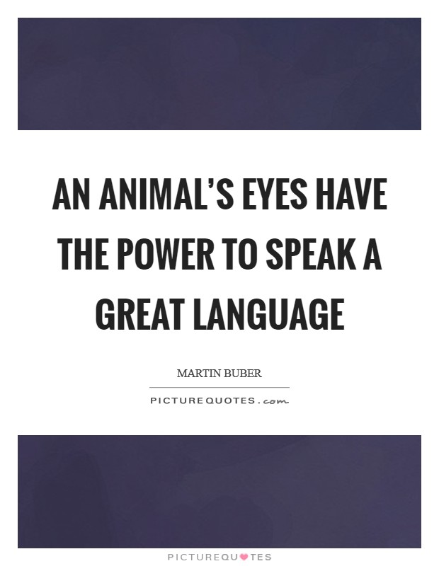 An animal's eyes have the power to speak a great language Picture Quote #1