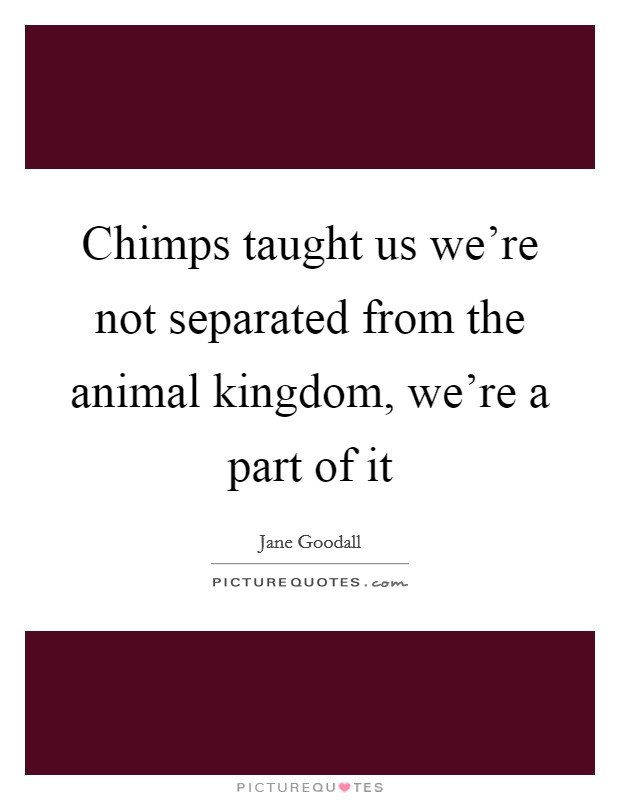 Chimps taught us we're not separated from the animal kingdom, we're a part of it Picture Quote #1