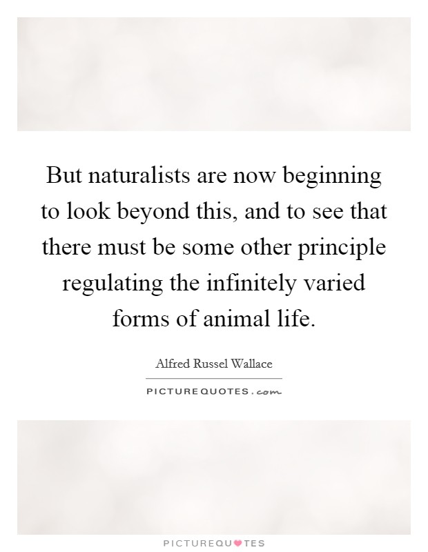 But naturalists are now beginning to look beyond this, and to see that there must be some other principle regulating the infinitely varied forms of animal life Picture Quote #1