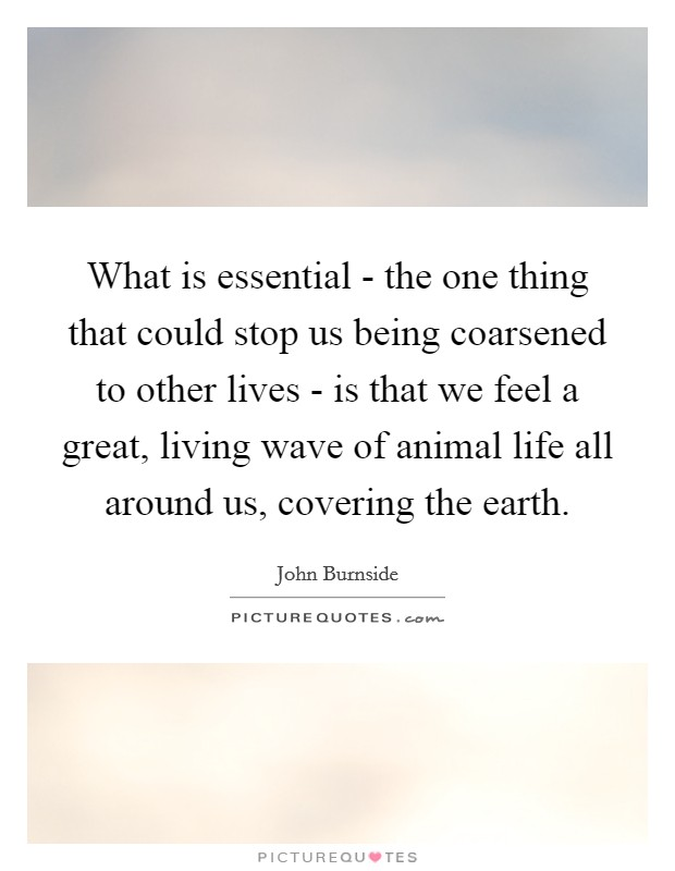 What is essential - the one thing that could stop us being coarsened to other lives - is that we feel a great, living wave of animal life all around us, covering the earth. Picture Quote #1