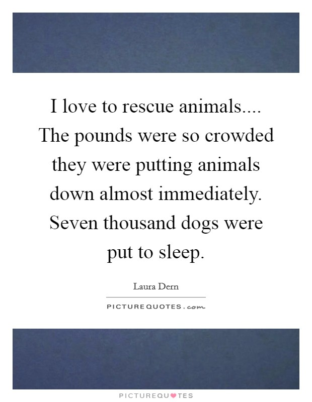I love to rescue animals.... The pounds were so crowded they were putting animals down almost immediately. Seven thousand dogs were put to sleep Picture Quote #1