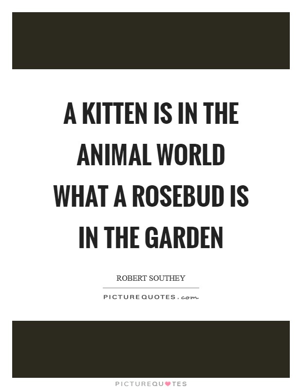 A kitten is in the animal world what a rosebud is in the garden Picture Quote #1