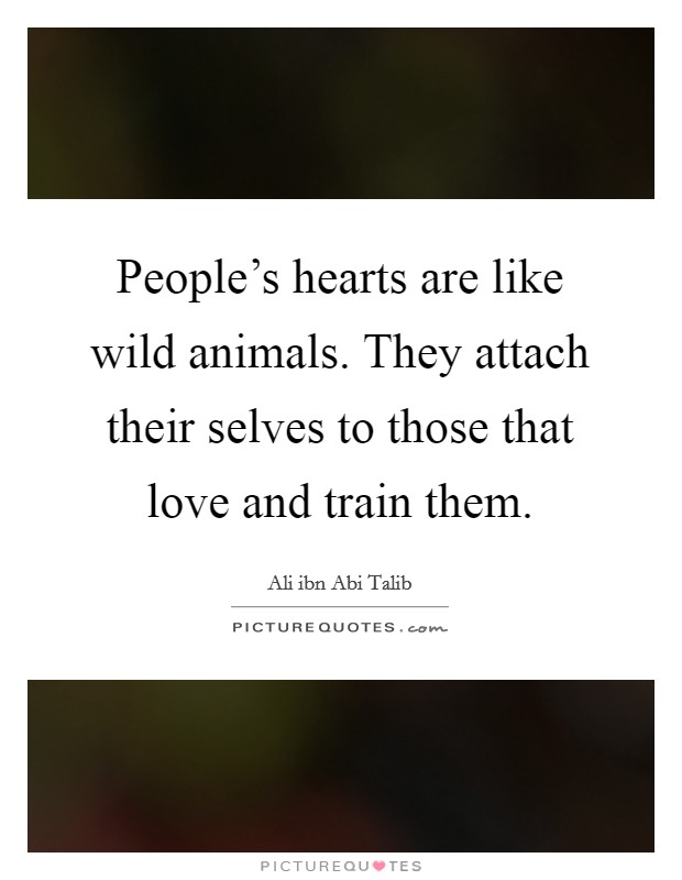 People's hearts are like wild animals. They attach their selves to those that love and train them Picture Quote #1