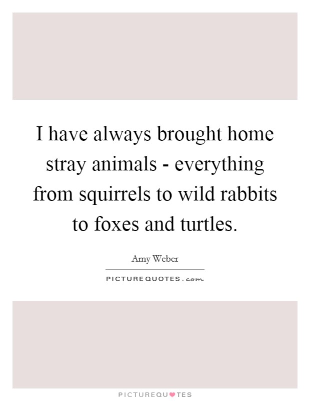 I have always brought home stray animals - everything from squirrels to wild rabbits to foxes and turtles Picture Quote #1