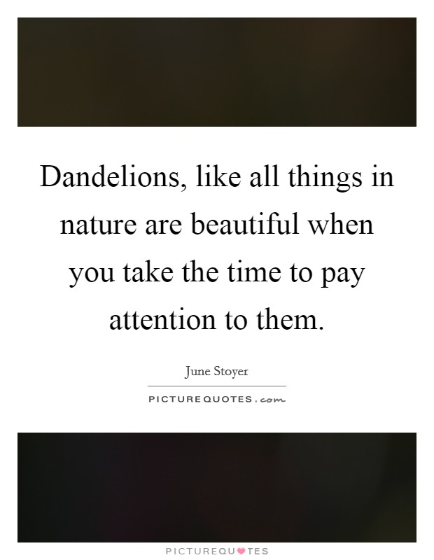 Dandelions, like all things in nature are beautiful when you take the time to pay attention to them Picture Quote #1
