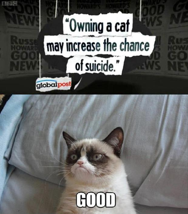 Owning a cat may increase the chance of suicide. Good Picture Quote #1