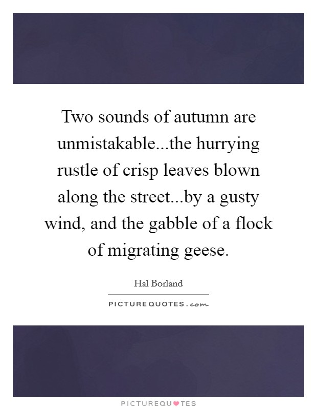 Two sounds of autumn are unmistakable...the hurrying rustle of crisp leaves blown along the street...by a gusty wind, and the gabble of a flock of migrating geese Picture Quote #1