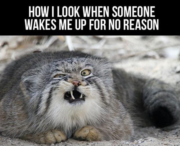 How I look when someone wakes me up for no reason Picture Quote #1