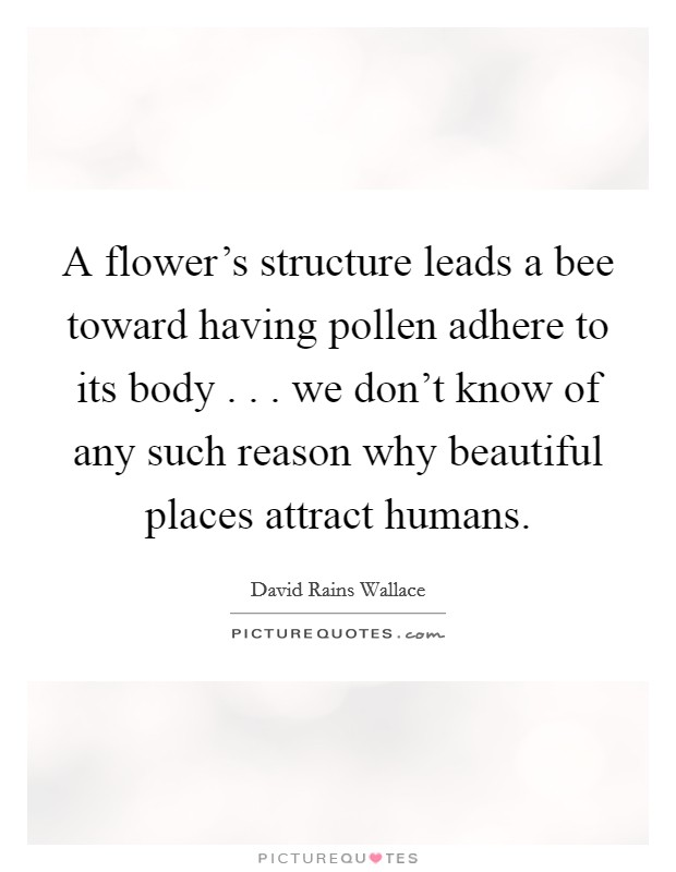 A flower's structure leads a bee toward having pollen adhere to its body . . . we don't know of any such reason why beautiful places attract humans Picture Quote #1