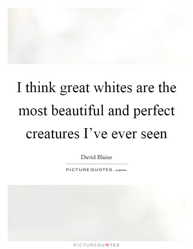 I think great whites are the most beautiful and perfect creatures I've ever seen Picture Quote #1