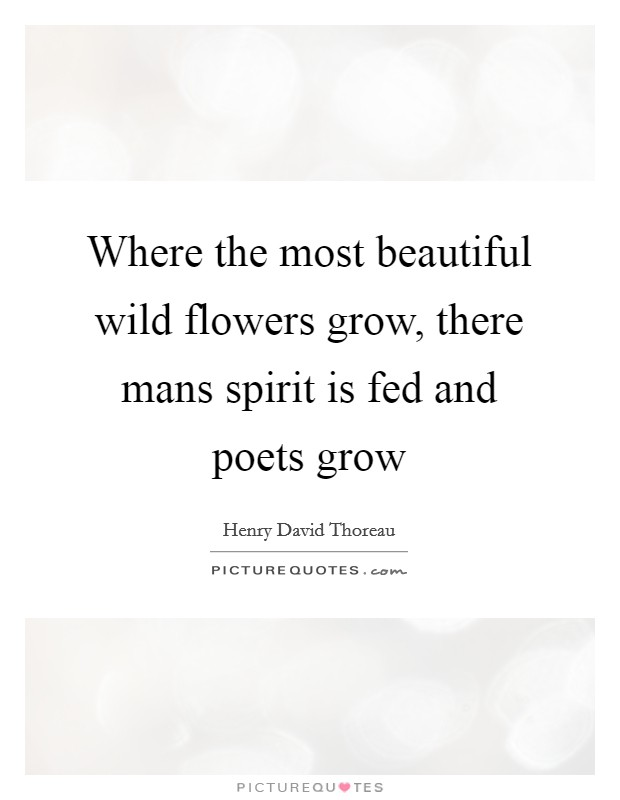 Where the most beautiful wild flowers grow, there mans spirit is fed and poets grow Picture Quote #1