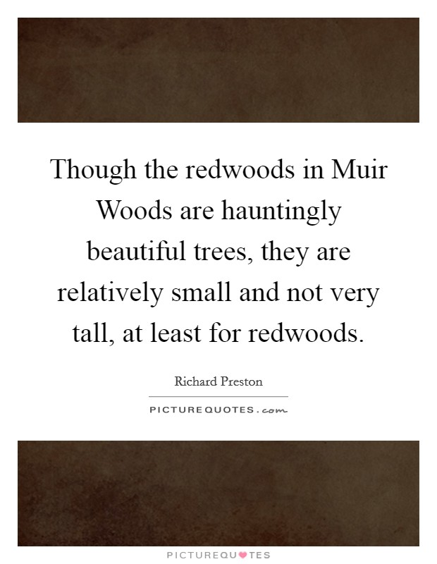 Though the redwoods in Muir Woods are hauntingly beautiful trees, they are relatively small and not very tall, at least for redwoods Picture Quote #1