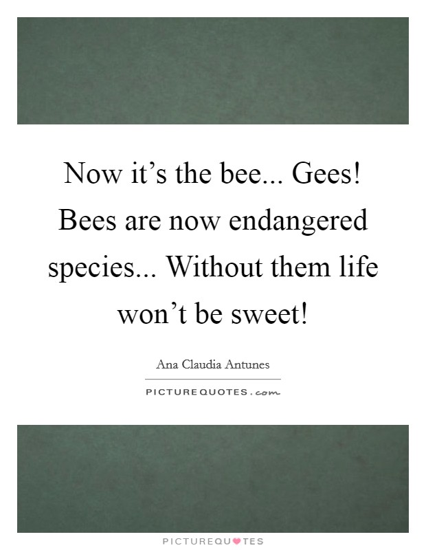 Now it's the bee... Gees! Bees are now endangered species... Without them life won't be sweet! Picture Quote #1
